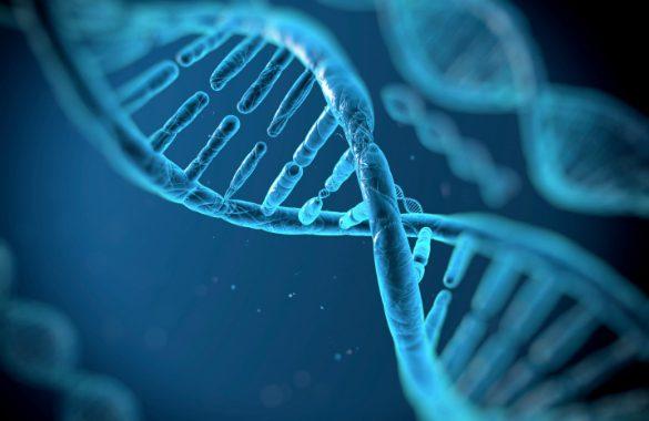 DNA-N